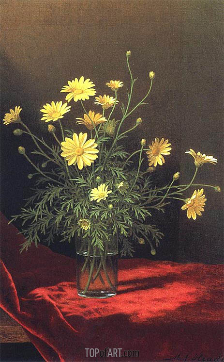Golden Marguerites, c.1883/95 | Martin Johnson Heade | Painting Reproduction
