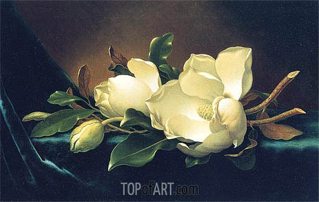Two Magnolias and a Bud on Teal Velvet, c.1885/95 | Martin Johnson Heade | Painting Reproduction