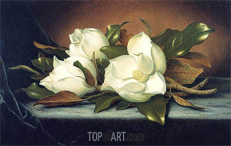 Giant Magnolias, c.1885/95 | Martin Johnson Heade | Painting Reproduction