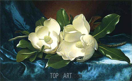Magnolias on a Blue Velvet Cloth, c.1885/95 | Martin Johnson Heade | Painting Reproduction