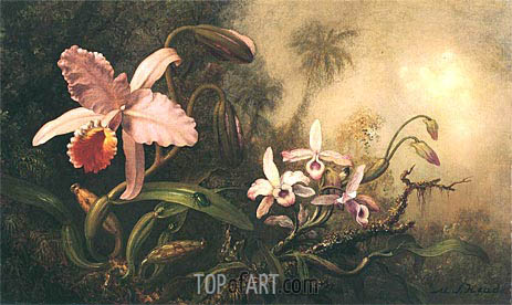 Orchids and a Beetle, c.1885/95 | Martin Johnson Heade | Painting Reproduction