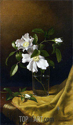 Martin Johnson Heade | Cherokee Roses in a Glass on Gold Velvet Plush, 1886
