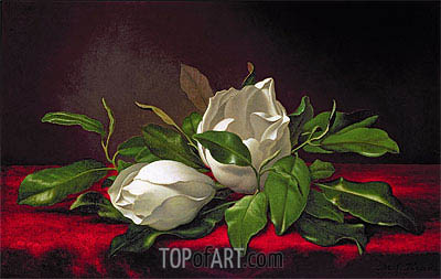 Magnolia (Magnoliae Grandiflorae), 1888 | Martin Johnson Heade | Painting Reproduction