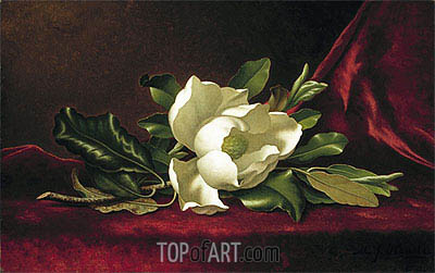 The Magnolia Flower, 1888 | Martin Johnson Heade | Gemälde Reproduktion