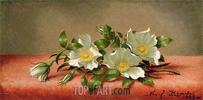 The Cherokee Rose, 1889 | Martin Johnson Heade| Gemälde Reproduktion