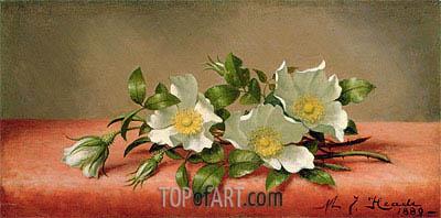 Martin Johnson Heade | The Cherokee Rose, 1889