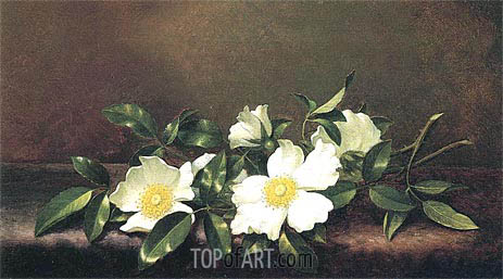 Cherokee Roses on a Purple Velvet Cloth, c.1890 | Martin Johnson Heade | Painting Reproduction