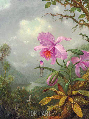Hummingbird Perched on an Orchid Plat, 1901 | Martin Johnson Heade | Painting Reproduction