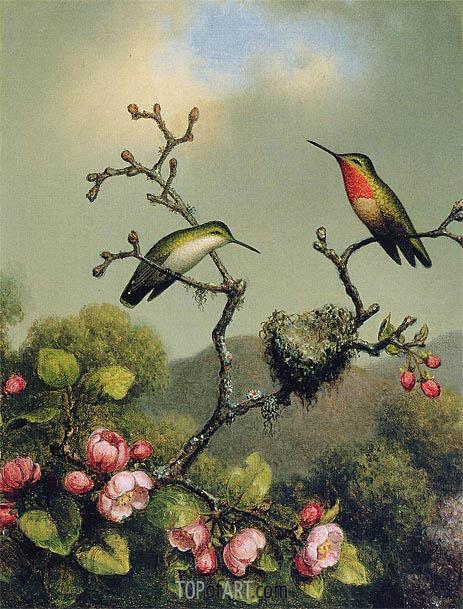 Martin Johnson Heade | Ruby Throat of North America, 1865