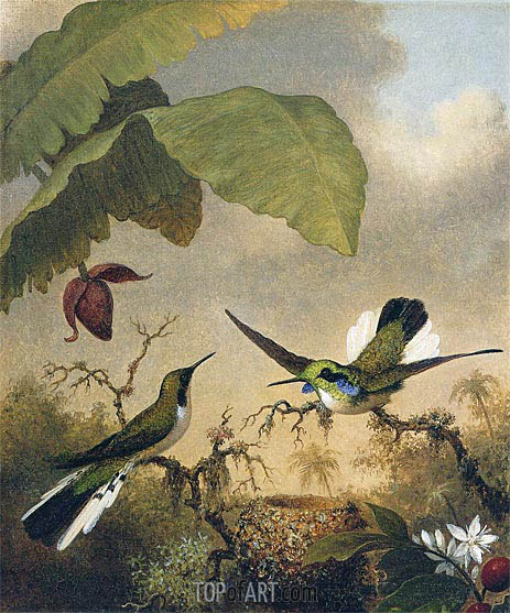 Black-Eared Fairy, c.1864/65 | Martin Johnson Heade | Gemälde Reproduktion