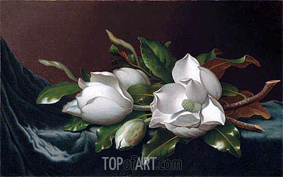 Magnolias on Light Blue Velvet Cloth, c.1885/95 | Martin Johnson Heade | Painting Reproduction