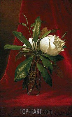 Magnolias, c.1883/00 | Martin Johnson Heade| Painting Reproduction
