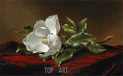 Magnolia Grandiflora, c.1885/95 | Martin Johnson Heade| Painting Reproduction