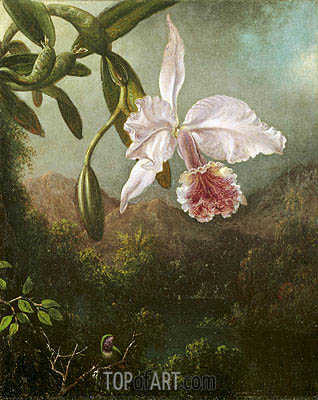 Orchid Blossoms, 1873 | Martin Johnson Heade | Painting Reproduction