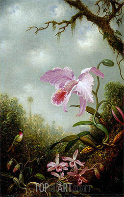 Hummingbird with Cattleya and Dendrobium Orchids, c.1890 | Martin Johnson Heade | Painting Reproduction