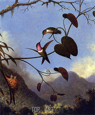 Amethyst Woodstar, c.864/65  | Martin Johnson Heade | Painting Reproduction