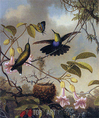 Fort-Tailed Woodnymph, c.1864/65  | Martin Johnson Heade | Gemälde Reproduktion
