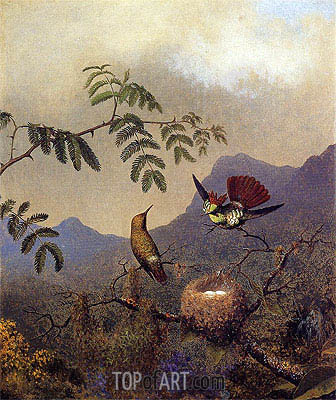 Frilled Coquette, c.1864/65  | Martin Johnson Heade | Painting Reproduction