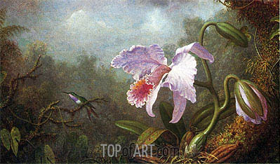 Hummingbird and Orchid,  | Martin Johnson Heade | Gemälde Reproduktion