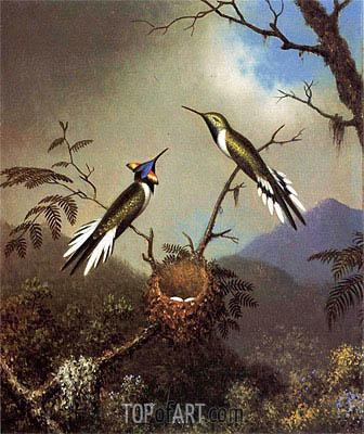 Martin Johnson Heade | Hummingbirds at Their Nest - Sun Gems, c.1864/65