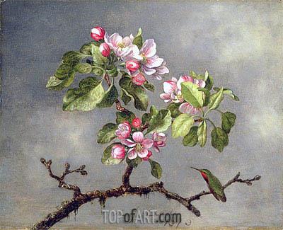 Martin Johnson Heade | Apple Blossoms and a Hummingbird, 1875