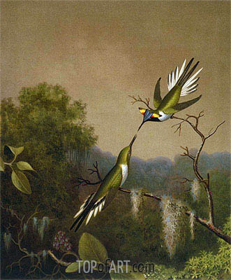 Brazilian Hummingbirds IV (Heliactin Cornuta), undated | Martin Johnson Heade | Painting Reproduction