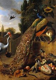 Pfauen, 1683 von Melchior d'Hondecoeter | Gemälde-Reproduktion