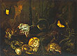 Still Life with Insects and Amphibians | Otto Marseus van Schrieck
