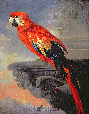 Parrot, c.1630/40 | Rubens| Painting Reproduction