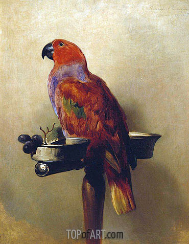 The Lory, 1837 | Landseer | Painting Reproduction