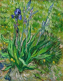 The Iris | Vincent van Gogh | Painting Reproduction