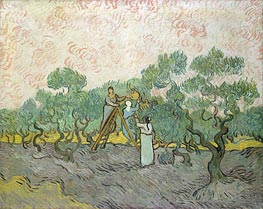 Olive Picking, 1889 by Vincent van Gogh | Painting Reproduction