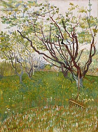 Orchard in Blossom, 1888 by Vincent van Gogh | Painting Reproduction