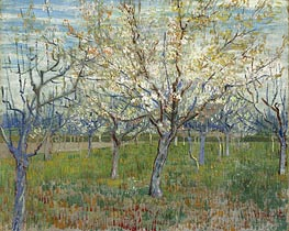 Orchard with Blossoming Apricot Trees | Vincent van Gogh | veraltet