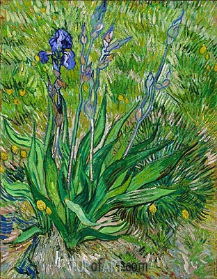The Iris, 1889 | Vincent van Gogh| Painting Reproduction