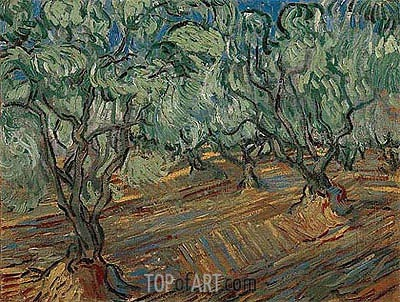Olive Grove, 1889 | Vincent van Gogh | Gemälde Reproduktion