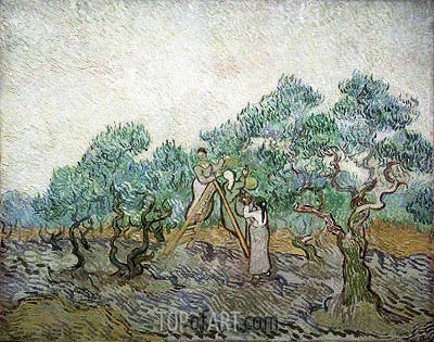 The Olive Orchard, 1889 | Vincent van Gogh | Gemälde Reproduktion