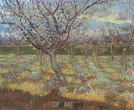 Apricot Tress in Blossom, April 1888 | Vincent van Gogh | Gemälde Reproduktion