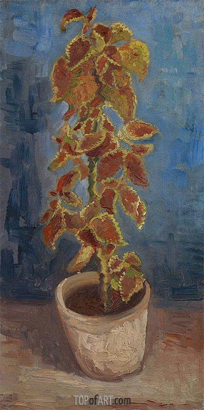 Flame Nettle in a Flowerpot, 1886 | Vincent van Gogh| Painting Reproduction