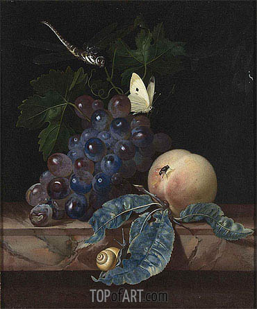 Willem van Aelst | A Still Life with Grapes, Peach, Cabbage-White and Dragon-Fly, 1665