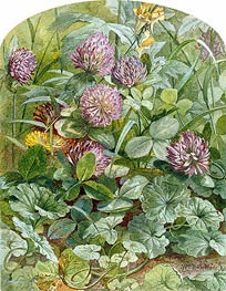 Red Clover with Butter-and-Eggs and Ground Ivy | William Trost Richards | Painting Reproduction