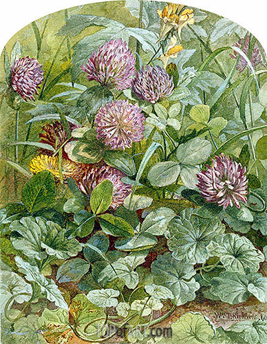 Red Clover with Butter-and-Eggs and Ground Ivy, 1860 | William Trost Richards| Painting Reproduction